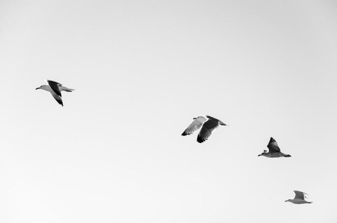 seagulls-984529_960_720